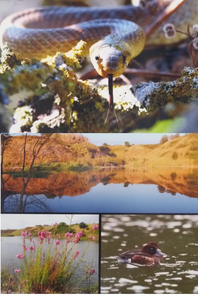 Biodiversità nella riserva Naturale di Decima Malafede