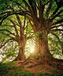 Cinque incontri per fare conoscenza di alberi e piante EVENTO SOSPESO